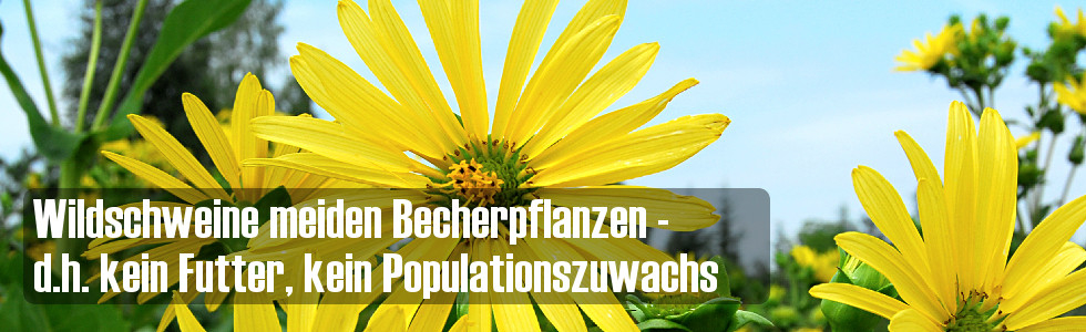 Becherpflanze